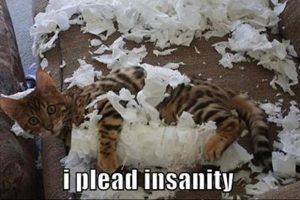 Katten en toiletpapier