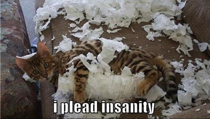 Katten en toiletpapier: geen goede combi