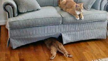 10 katten die geen pro zijn in verstoppertje