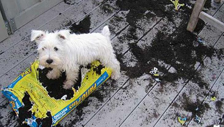 10 honden die dol zijn op tuinieren