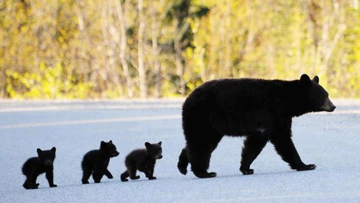 Foto's van 8 lieve babyberen