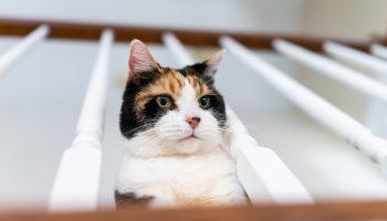 katteneigenaar 9