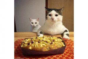 Eten met een kat