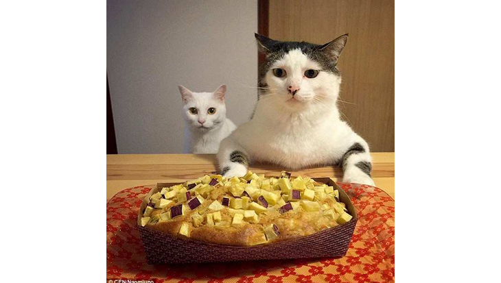 Eten met een kat in de buurt