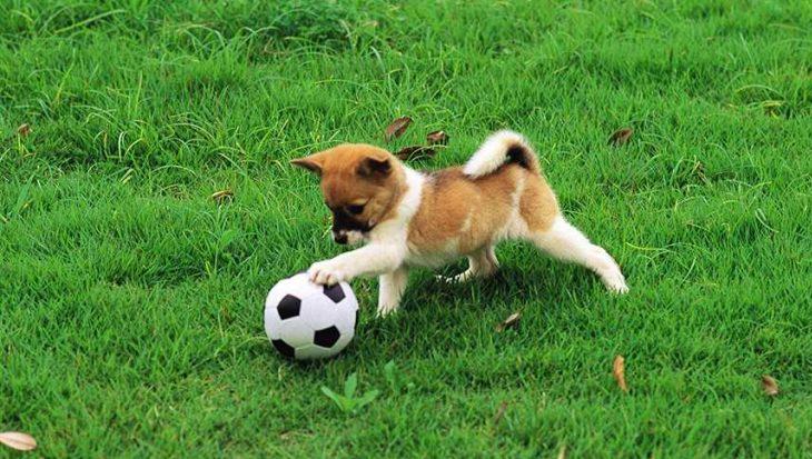 8 honden die zo mee kunnen doen aan de Olympische Spelen