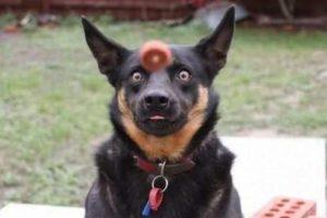 hondengezichten