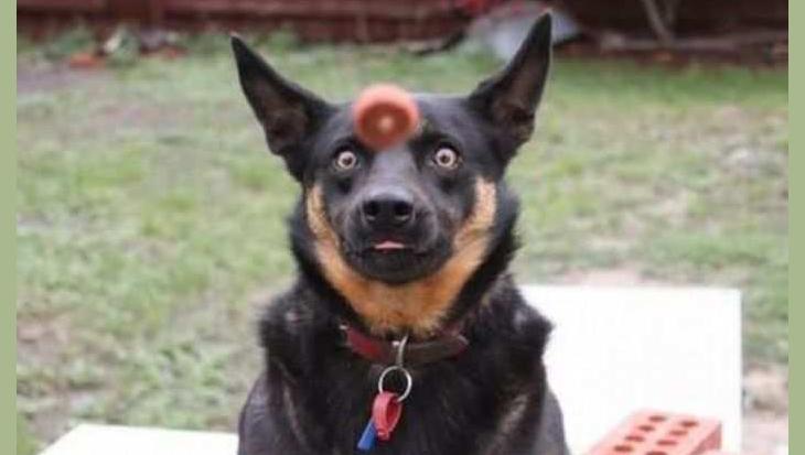 10 leuke foto's van hondengezichten