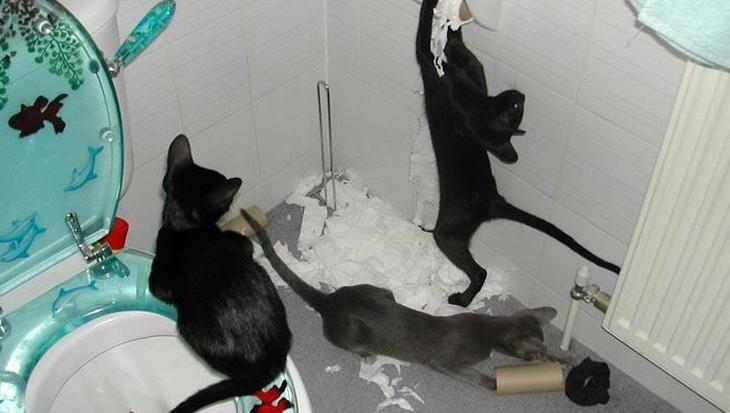 Katten en toiletpapier: geen goede combi – deel II
