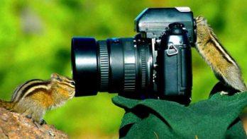 10 dieren die gewend zijn aan een camera