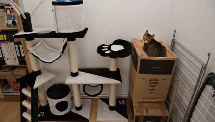10 voorbeelden van kattenlogica