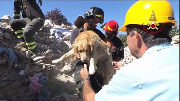 Dieren ook slachtoffer van aardbeving
