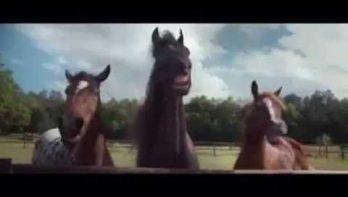 Paarden liggen in een deuk