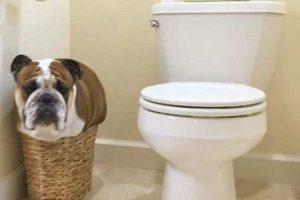 honden die gek zitten