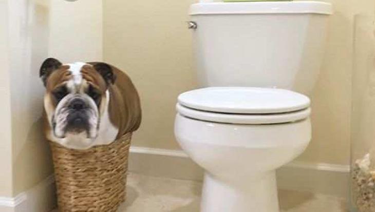 8 honden die gek zitten