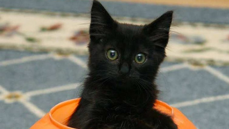 Foto's van 10 zwarte kittens