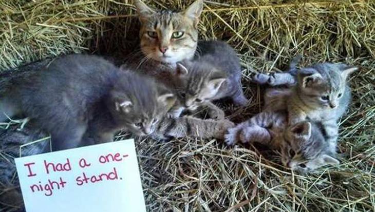 10 guilty katten