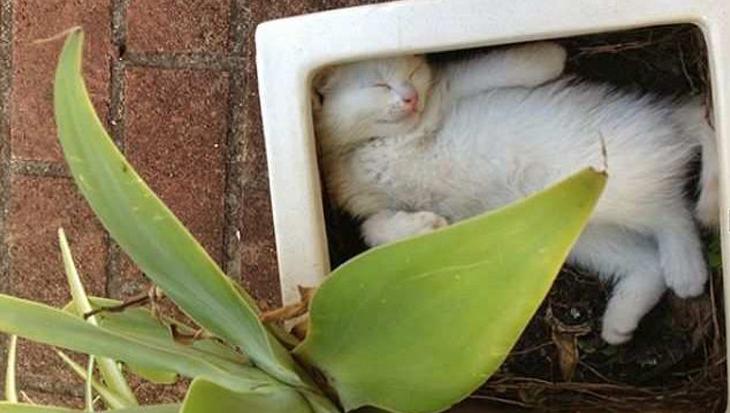 10 foto's die bewijzen dat katten eigenlijk planten zijn