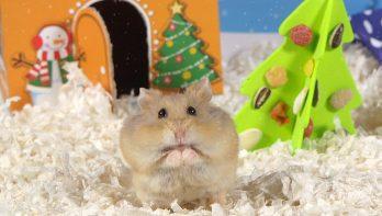 Deze hamster heeft een kerstkooi