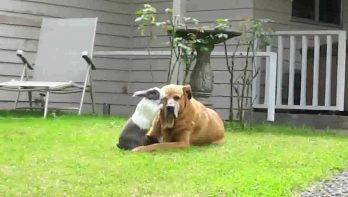 Hond en konijn zijn beste vrienden