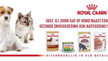 Droogvoeding en natvoeding: gezond combineren met Royal Canin!