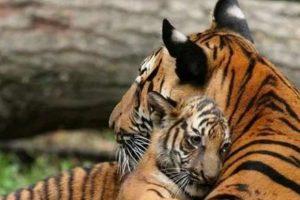dierenmoeders