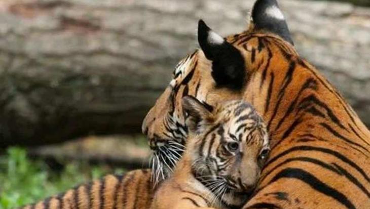 10 trotse dierenmoeders