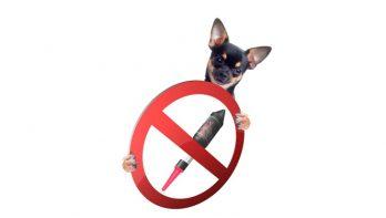 Onderzoek: meerderheid huisdierenbaasjes voor particulier vuurwerkverbod