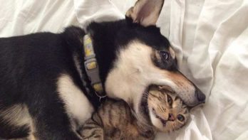 10 honden die zich niet netjes gedragen