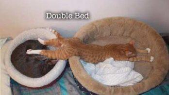 Omdat het zo leuk blijft: kattenlogica!