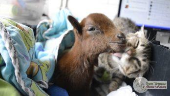 Geredde kat en geredde geit zijn beste vrienden