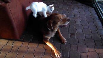 Lief geitje speelt met hond