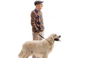 Help in jouw buurt iemand met zijn huisdier