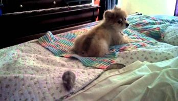 Hond speelt met hamster