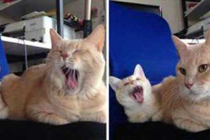 katten en mini's