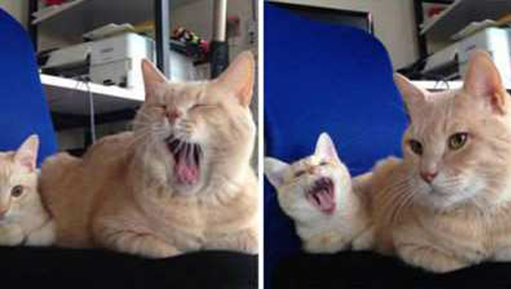 Katten en hun kleine mini's