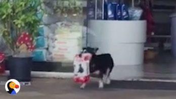 Hond doet zelf boodschappen