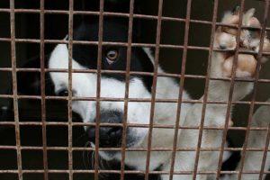 bijtincidenten en hondenhandel