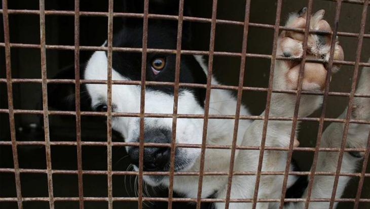 Staatssecretaris belooft structurele aanpak bijtincidenten en hondenhandel