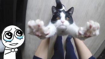 Deze kat houdt ECHT van knuffelen