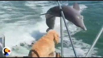 Hond ziet voor het eerst dolfijnen
