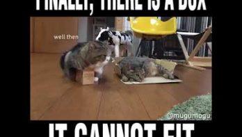 Een doos waar de kat niet in past!