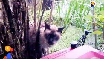 Man redt kat uit boom in moeras na orkaan Harvey