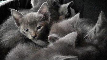 Rustgevend: een kluitje spinnende kittens