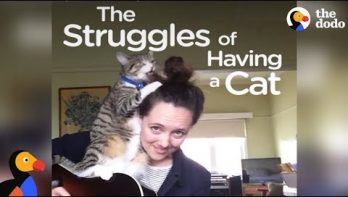 Wat er met je leven gebeurt als je een kat hebt...