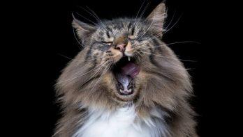 12 prachtige dierenportretten van dieren die verveeld zijn