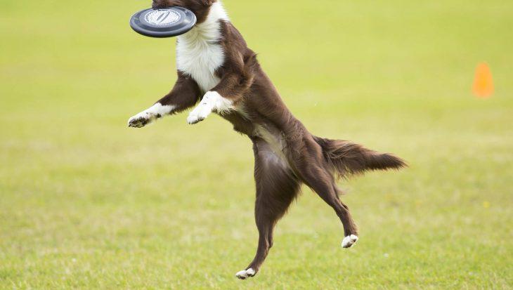 Rasloze Hondendag