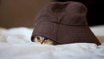 10 katten die peek-a-boo spelen