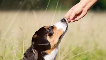 Zo beloon je hond op de juiste manier