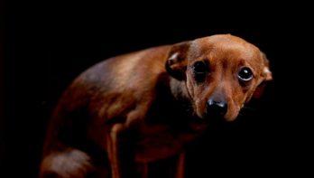 Geen huisdieren meer voor mishandelaars