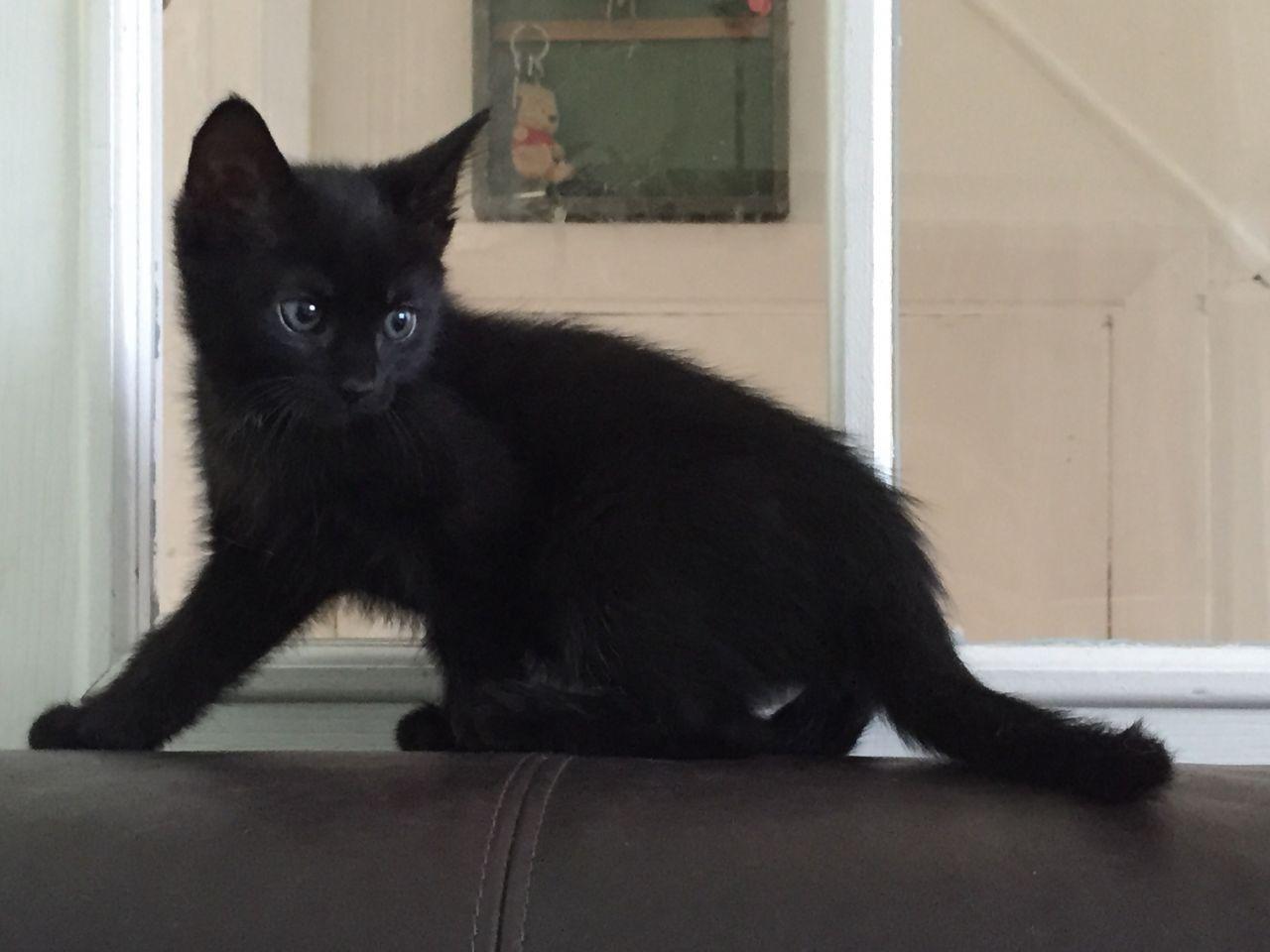 Foto S Van 10 Zwarte Kittens Hart Voor Dieren